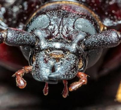 Co łączy łańcuch tnący z chrząszczem?