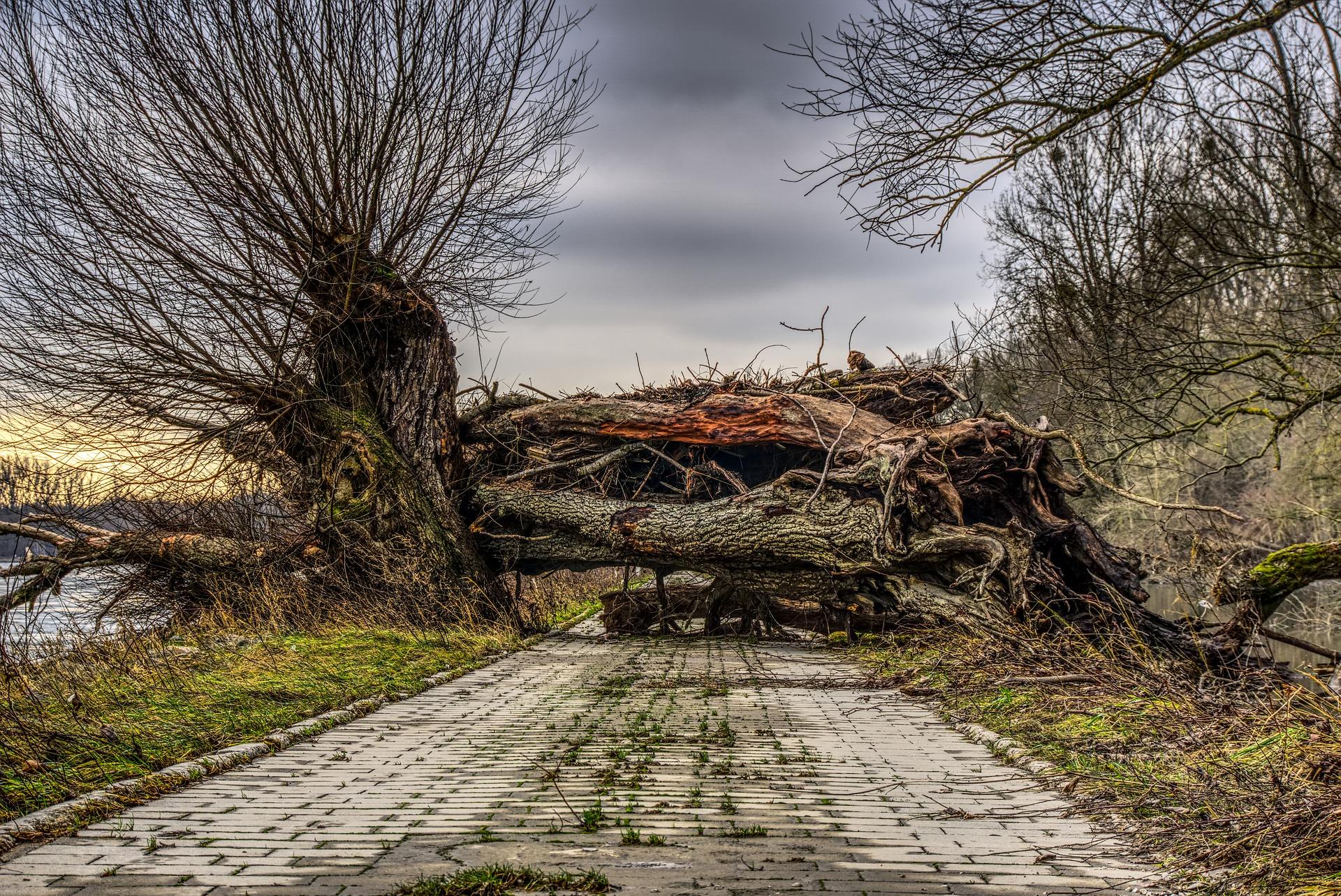 Przerzynka drewna po nawałnicy