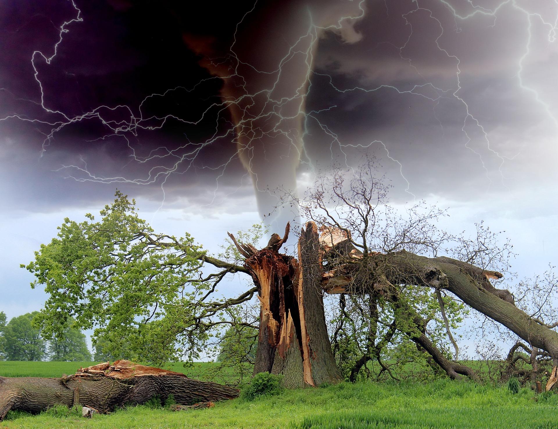Burza w lesie – i co teraz?