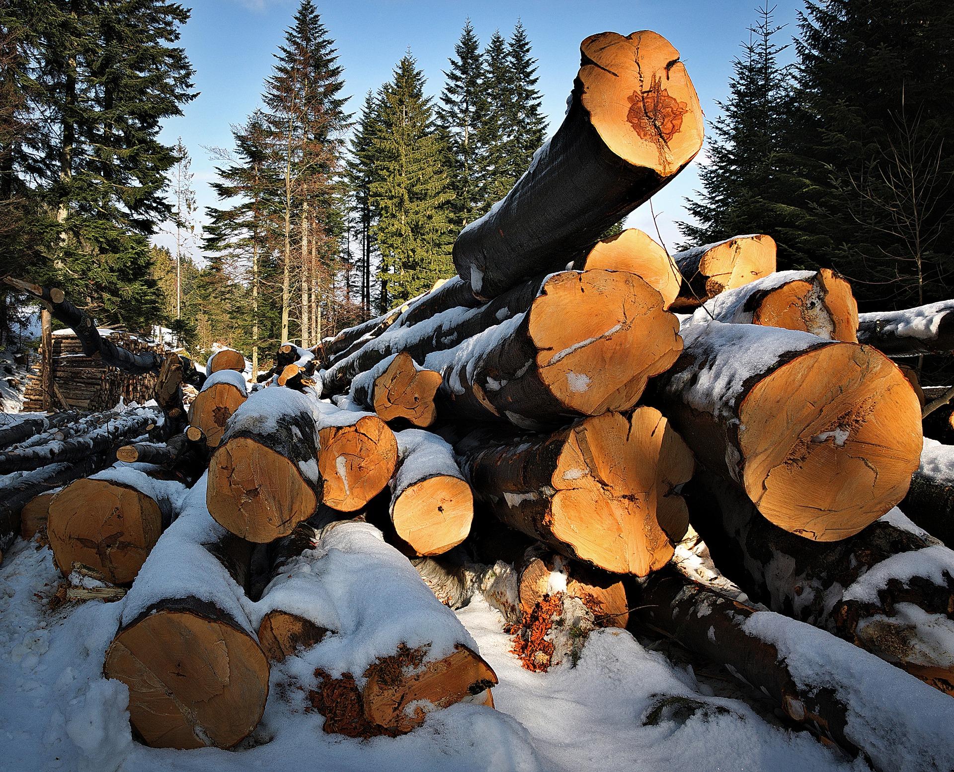 5 powodów, dla których trzeba ścinać drzewa